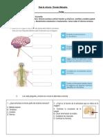Guia Refuerzo Sistema Nervioso