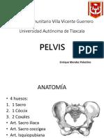 Pelvis.pptx