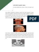 Anatomía Topográfica Del Cuell12