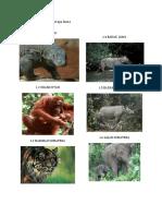 Berikut Ini Adalah Beberapa Fauna Indonesia