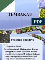 TEMBAKAU