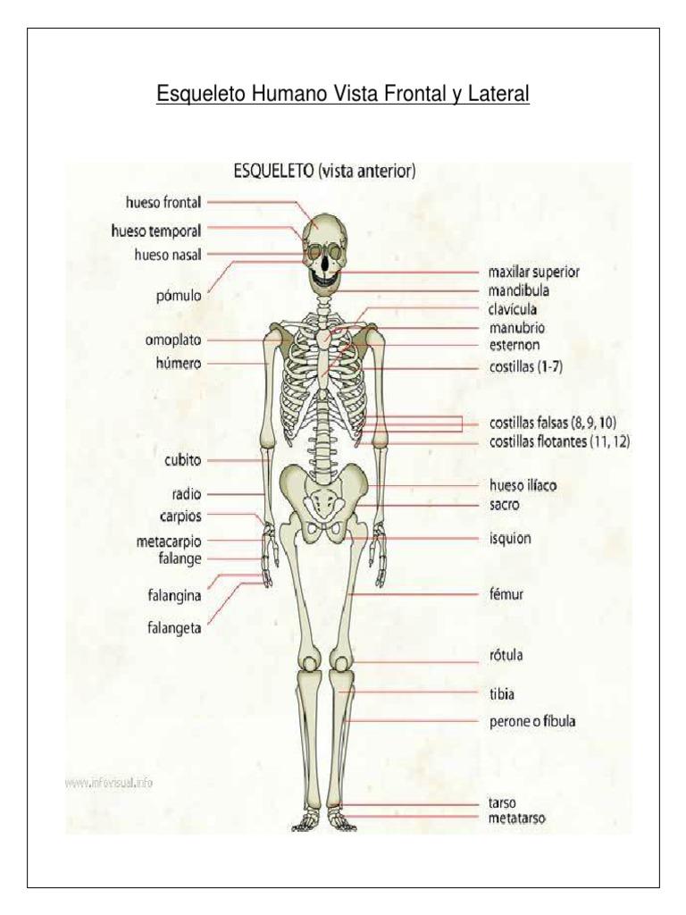 Esqueleto Humano Vista Frontal y Lateral