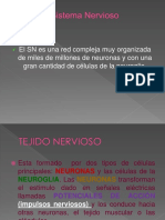 Sistema Nervioso Embrio (1)