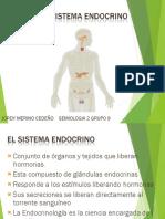 El Sistema Endocrino JORDY MERINO CEDEÑO