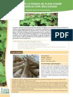 Cultiver Le Panais de Plein Champ en Agriculture Biologique_lpc-panais