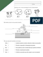 as plantas.pdf