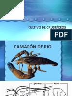 CULTIVO DE CRUSTÁCEOS.pptx
