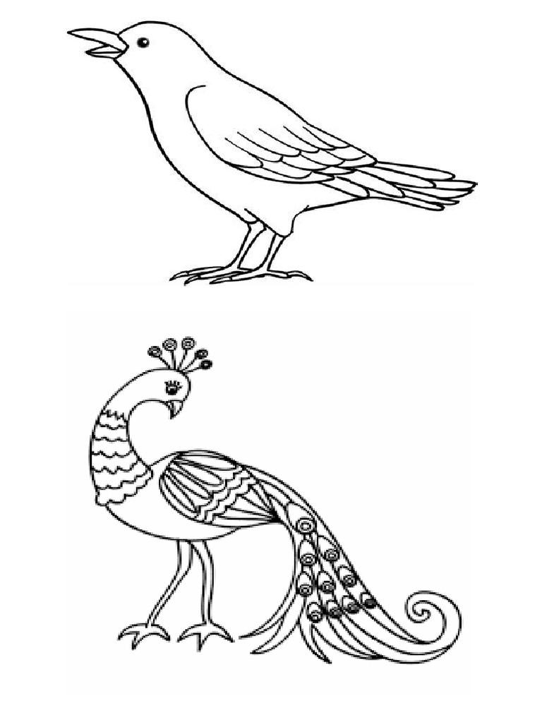 Gambar Merpati