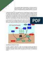 CICLO-DEL-POTASIO.docx
