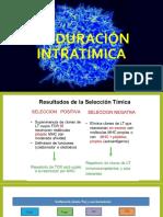 Maduración intratímica