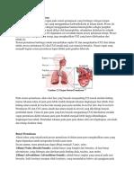 Sistem Pernafasan Paru