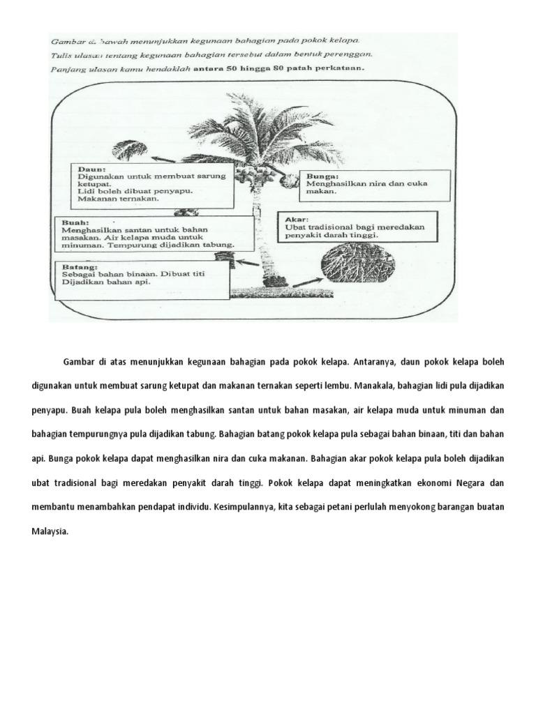 Jawapan kegunaan pokok kelapa ccuart Gallery