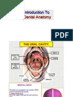 Intro to Dental Anatomy