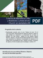 BRANDI Murciélagos y Roedores