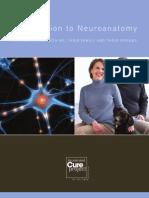 acp-neuroanat(2)