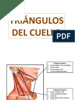 6 CFC - TRIANGULOS DEL CUELLO.pptx