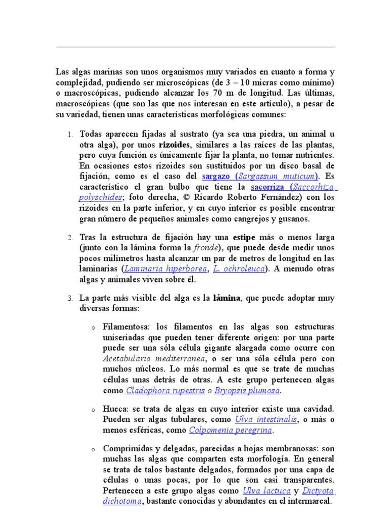 fad83b42fd06 Las Algas Marinas Son Unos Organismos Muy Variados en Cuanto a Forma y  Complejidad