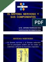 CLASE_3_(Sistema_Nervioso)_[Modo_de_compatibilidad]
