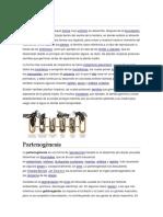 Viviparidad.docx