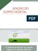 Aula 2 Organização Do Corpo Vegetal