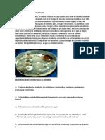 Bacterias en El Cuerpo Humano