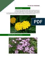 2014 Catalogo de Plantas Perennes Disponibles