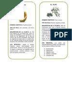 album de hojas (2).docx