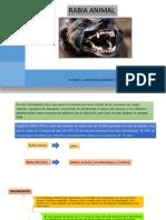 RABIA ANIMAL- LLUMIQUINGA RICARDO- GRUPO 8.pptx