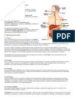 Digestion Informacion