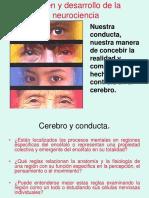Origen y Desarrollo de La Neurocienciaynerviios Craneales (1)
