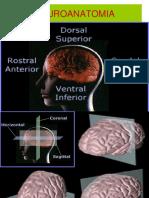 Neuroanatomia Practico