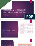 histo-parte1.pptx