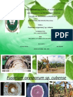 Fusarium Oxysporum Sp