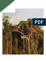 Selva Costa Sierra