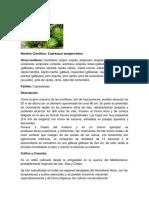 CIPRÉS.docx