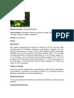 GUARUMO.docx