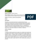 ESPINACA.docx