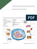 Fichas Tema 1 y 2 Bio 3ESO