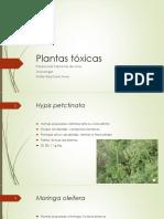 Plantas tóxicas