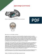 Hippocampe Cerveau Definition Wikipedia