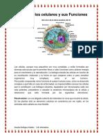 Los Organelos Celulares y Sus Funciones