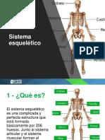 ppt Estructuras Del Sistema Esqueletico