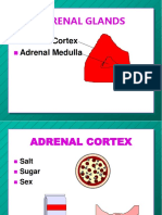 Adrenals p 07