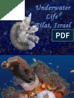Images Underwater Eilat Israe2l