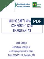 consorciomilhosafrinhaebraquiariaresumo-130819135546-phpapp01