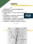 3.CELULA PROCARIOTA1