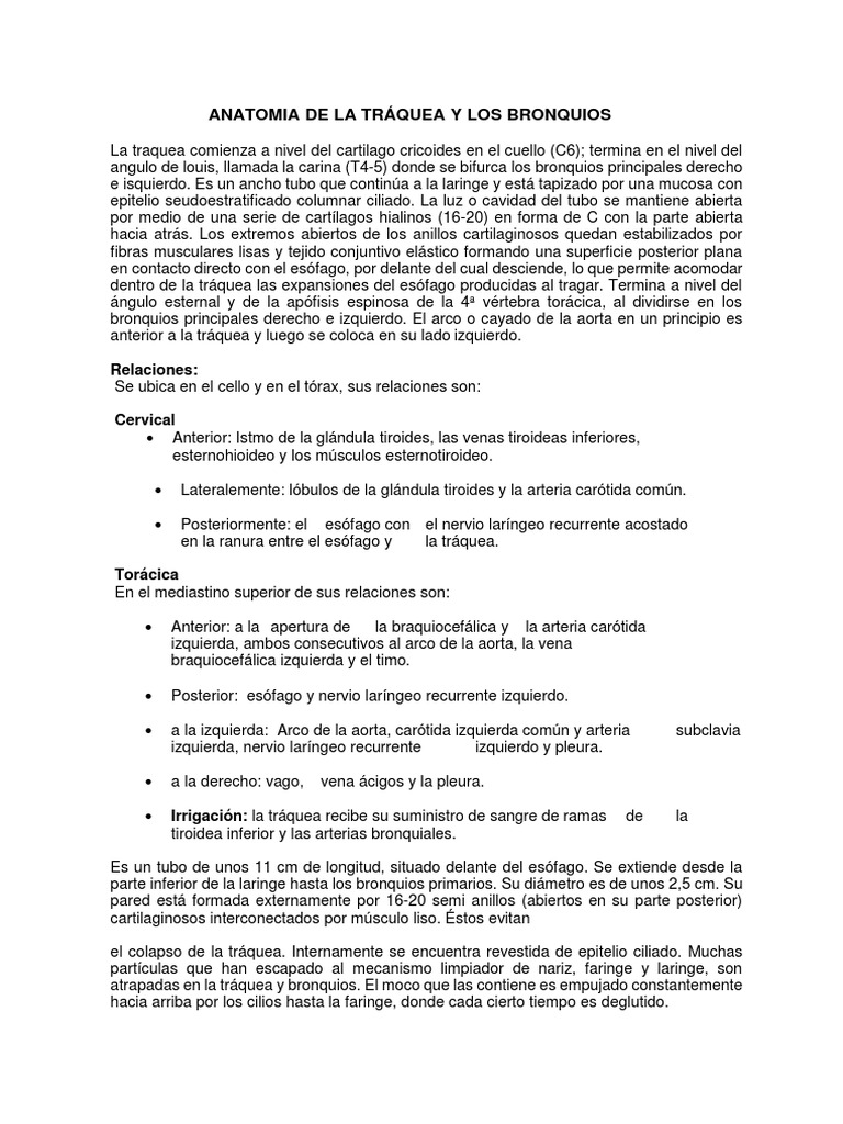 Anatomia de La Tráquea y Los Bronquios