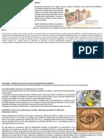 PDF Actividades Sugeridas