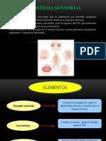 Neurofisiologia-desarrollo