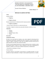 Informe Del Maíz - Cabezas